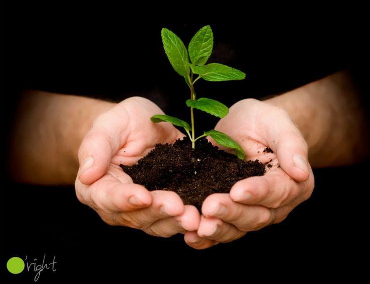 21 martie este Ziua internațională a pădurilor, pe care o celebrăm cu scopul de a crește gradul de conștientizare asupra gestionării, conservării și dezvoltării durabile a tuturor tipurilor de păduri, în beneficiul generațiilor prezente și viitoare.