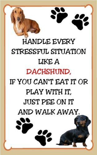 The Wiener dogs answer for everything. Dachshund Stressful Situation Magnet for The Refrigerator | eBay