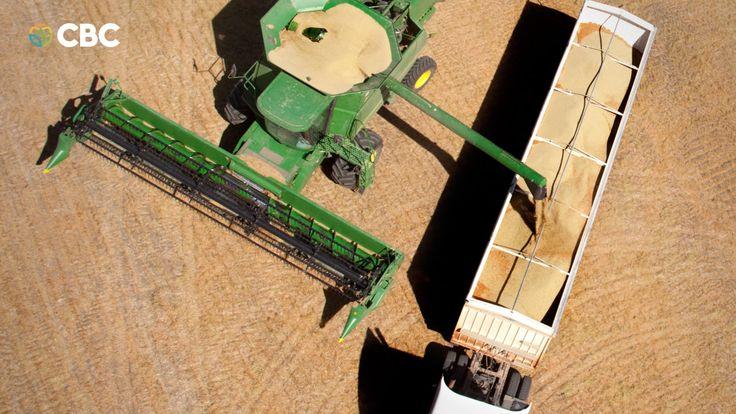 Colheita de soja é iniciada no Paraná mesmo com umidade excessiva