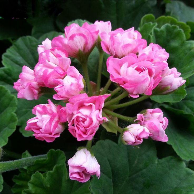 1000 idee su semi di fiori su pinterest giardino di for Vendita semi fiori
