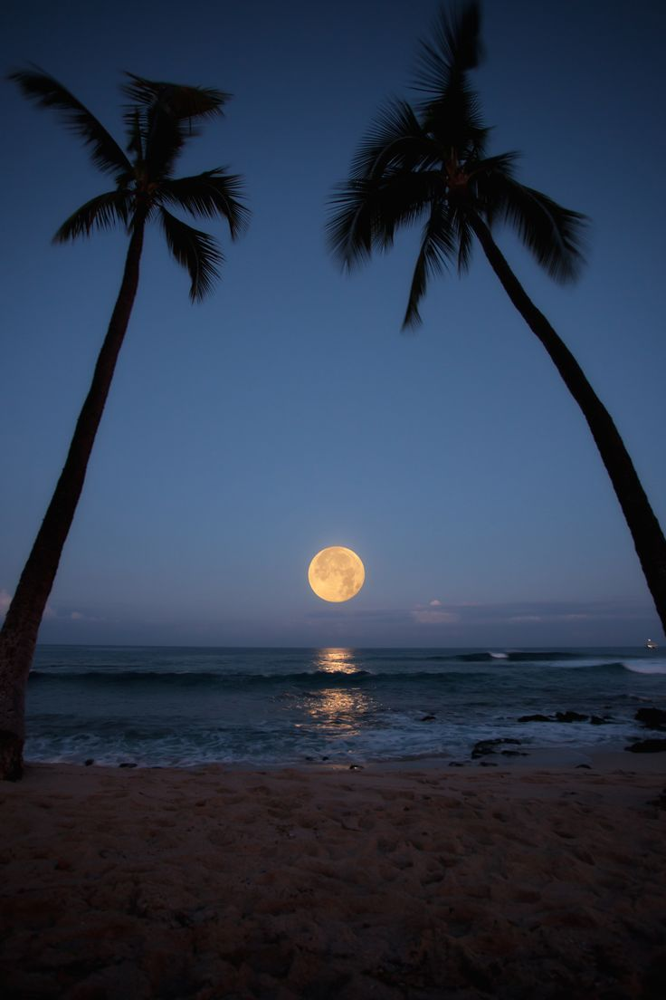 The beach, palm trees, and the moon. Perfect...