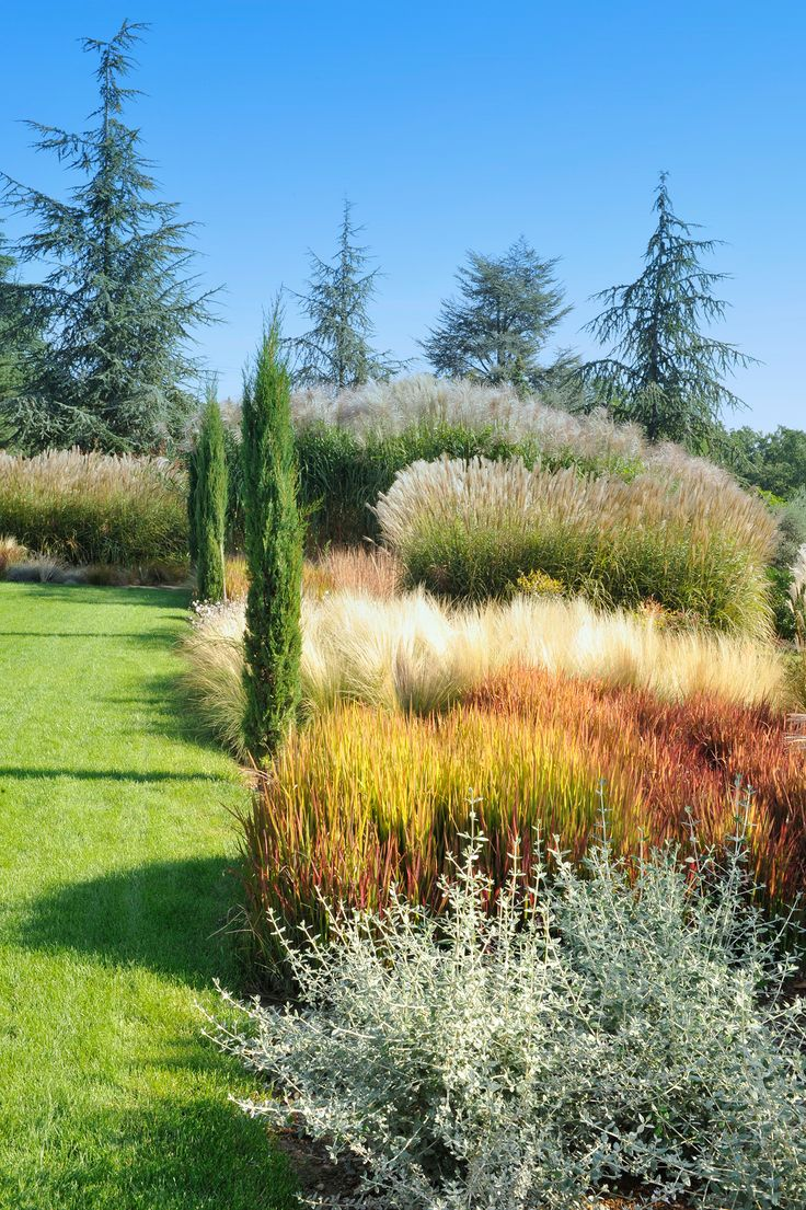 244 best garden of shrubs grasses evergreens trees for Architecte paysagiste