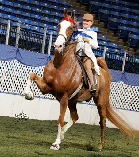 American Saddlebred Platinum's New Look and Hunter Chanclor