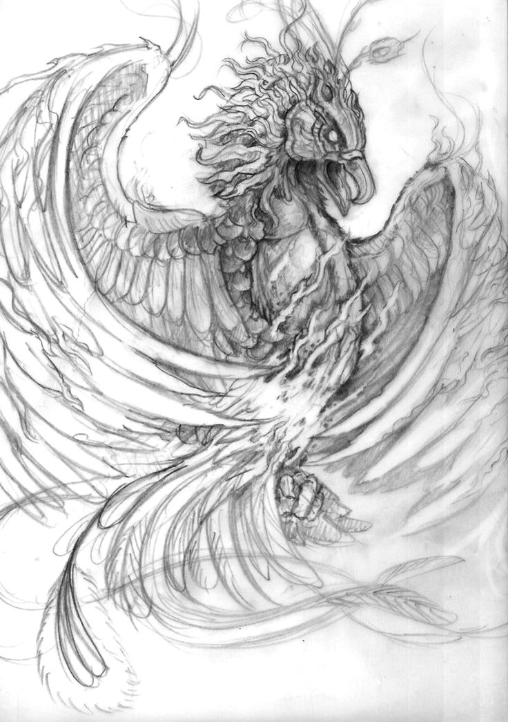 48 Best Images About Drawings On Pinterest   Tattoo Studio Dragon Drawings And Raven Tattoo