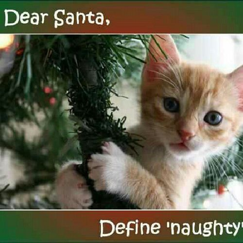 Image result for naughty kitten meme