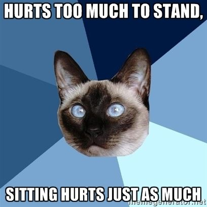 Hurts too much to stand, sitting hurts just as much | Chronic Illness Cat