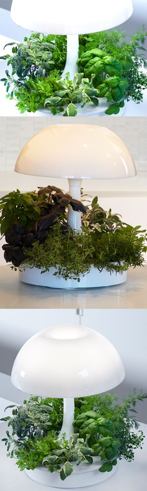 Light your space and grow fresh herbs, all year long. Unique growing medium & integrated grow light makes it easy to have fresh herbs year long. Be the first to know about our living design product launches and receive exclusive pre-launch pricing.