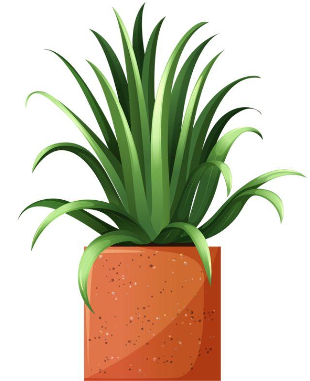 188 best CLIP ART - POTTED PLANTS - CLIP ART images on ...