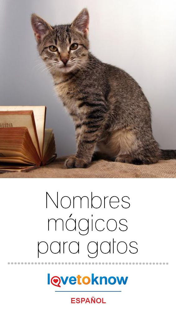 Nombres mágicos para gatos Are you looking for magic cat names for your new feline friend? There are many magical cats in cinema, literature and mythology, and one of their names could be perfect for your pet. I Love Cats, Cute Cats, Magic Names, Nyan Nyan, Magic Cat, Neko Cat, Harry Styles Wallpaper, Cat Names, Your Pet