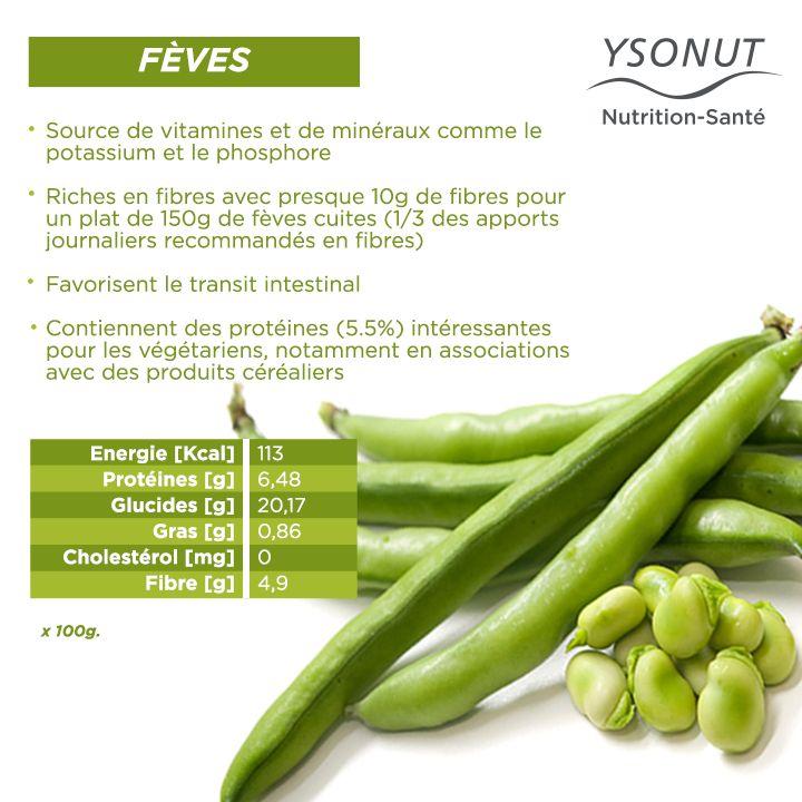 Aujourd'hui, nous vous parlons des #fèves, un légume qui a beaucoup de qualités nutritives.