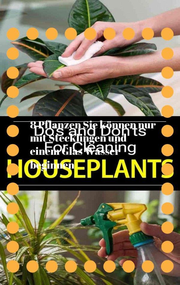 Verwandeln Sie Ihr Badezimmer In Ein Tropisches Paradies Mit Zimmerpflanzen Die Hohe Luftfeuchtigkeit Im Durchschnittlichen In 2020 Plants Fiddle Leaf Tree Silver Bay