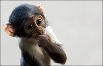 Small monkey    by Olivier Maurin