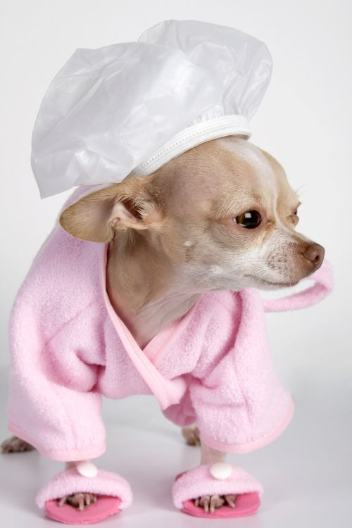 Dog at day spa. This would be Christa if you had your way. ;-) LOL