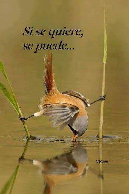 Imagenes De Aves Con Frases De Superacion