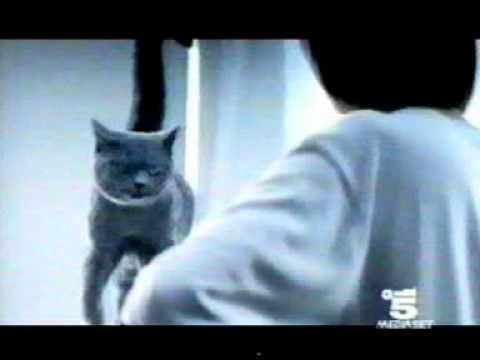 Sheba (TV Spot 1999)