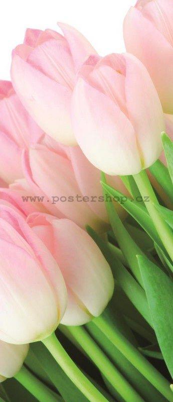 Fototapeta - Kytice tulipánů
