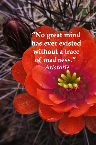 """""""No great mind has ever existed without a trace of madness.""""  Aristotle -- Examine 40 intriguing quotes on creative inspiration at http://www.examiner.com/article/forty-quotations-for-writing-inspiration"""