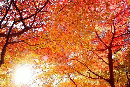 fall colors <3 Fall Leaves, Take Pictures, Autumn Leaves, Colors, Favorite Seasons, Autumn Beautiful, Fall Trees, Photography, Autumn Splendor