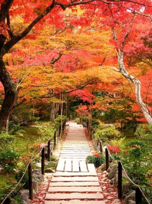 宝筐院 Hokyo-in Temple,Kyoto