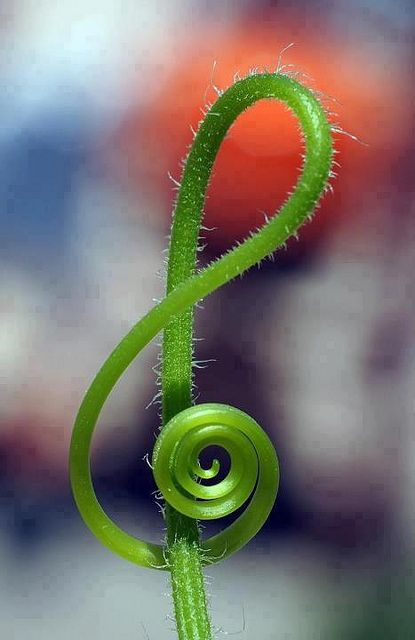 """""""Natural Music,"""" by Popeye's View, via Flickr. -- I LOVE this!!: Reduce Stress, Music Note, Trebleclef, Treble Clef, Green, Plants, Music Symbols, Ferns, Mothers Natural"""
