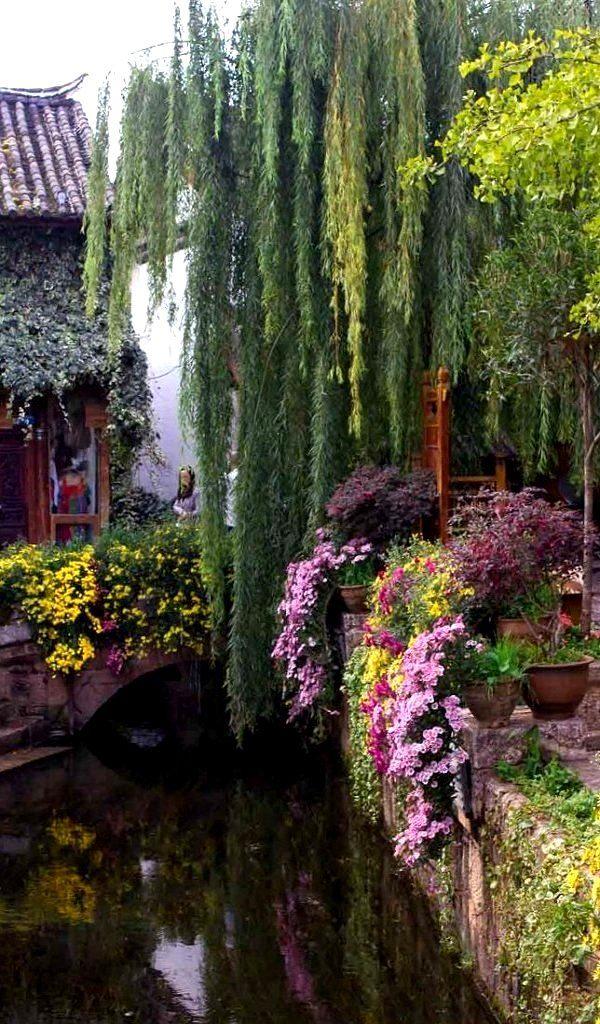 Beautiful Willows at Lijiang, China