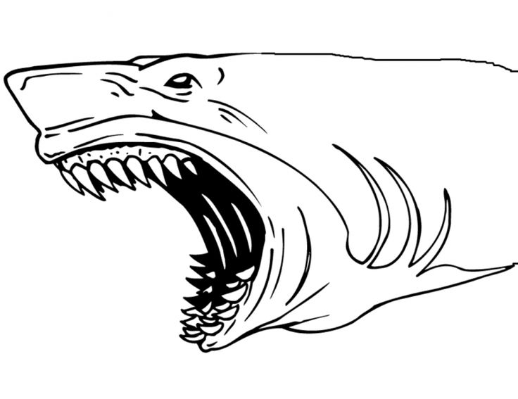 73 best Shark Coloring Pages images on Pinterest Sharks