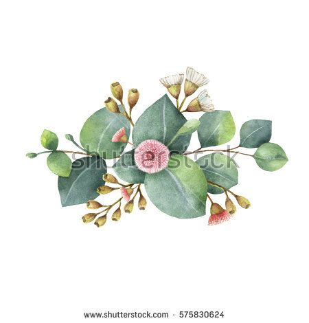 Watercolor hand painted bouquet with green eucalyptus leaves and branches. Healing Herbs for cards, wedding invitation, posters, greeting design isolated on white background.