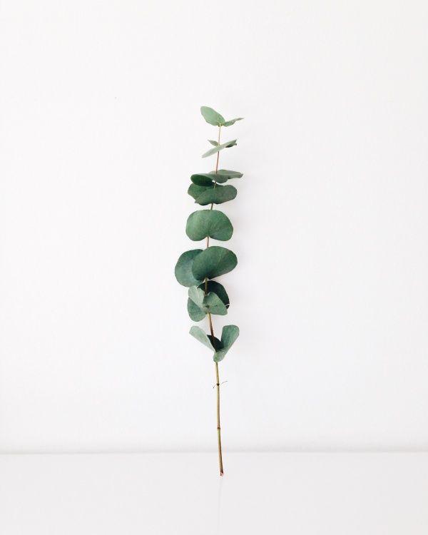 Plant portrait | juliadandebo | VSCO Grid