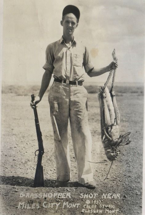 Grasshopper shot near Miles City Mont 1937 >> Why that is one big grasshopper! ha ha ha! I bet it is friends with the Jackalope...