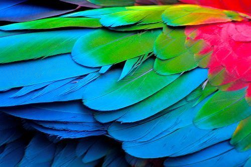 Plumas de Guacamaya: Make Art, Natural Beautiful, Amazing Natural, Color Hair, Bright Color, Parrots, Galleries Wall, Color Birds, Tropical Birds