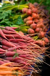 As temps start to drop, make sure you're ready to preserve your root vegetables with this DIY root cellar from gardening legend Eliot Coleman. Plus more projects and recipes to add to your Fall to-do list