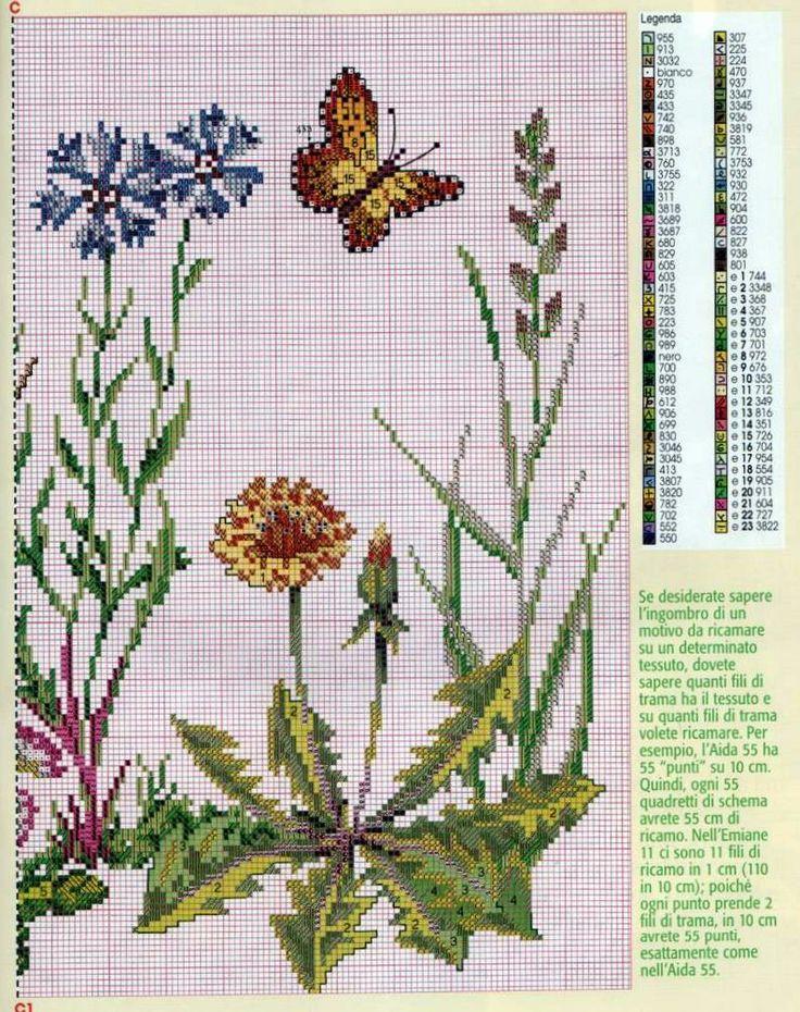 fiori di campo 5