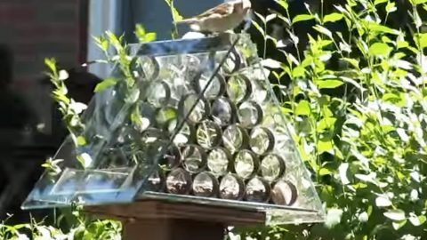 He Makes A Brilliant Squirrel Proof Bird Feeder Unparalleled to Any (Watch!)   DIY Joy Projects and Crafts Ideas