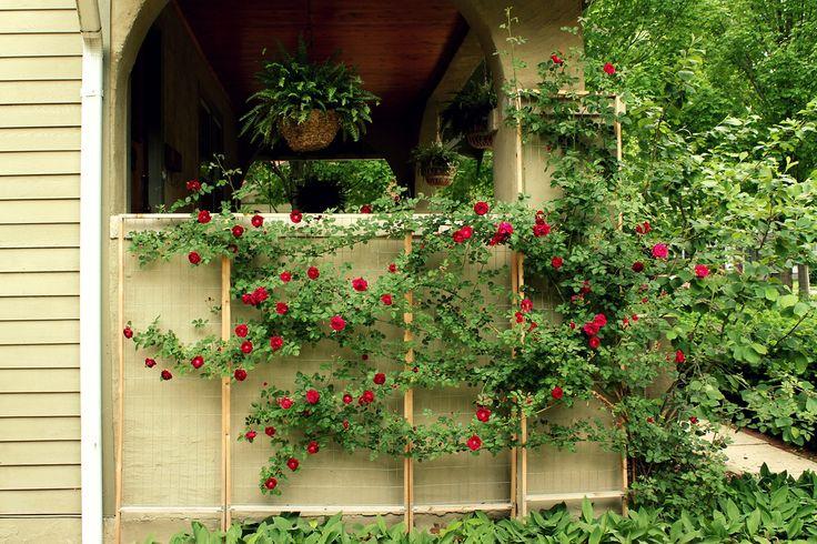 how to make a custom rose trellis   www.annaleahart.com/2011…   Flickr