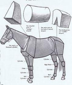 Horse anatomy - Pesquisa Google                                                                                                                                                                                 More