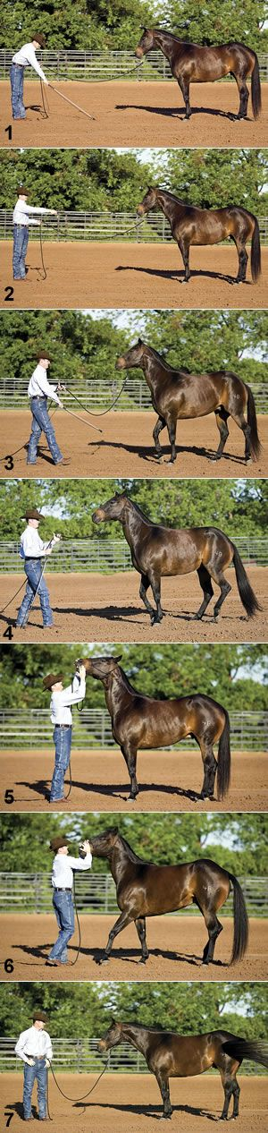 Clinton Anderson: Respecting Personal Space...most important lesson I taught Jazmyn, most important lesson for EVERY horse