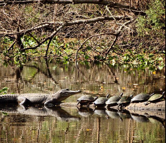 On a bayou in Louisiana near New Orleans