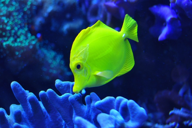 20 Best Images About Ripley 39 S Aquarium Of The Smokies
