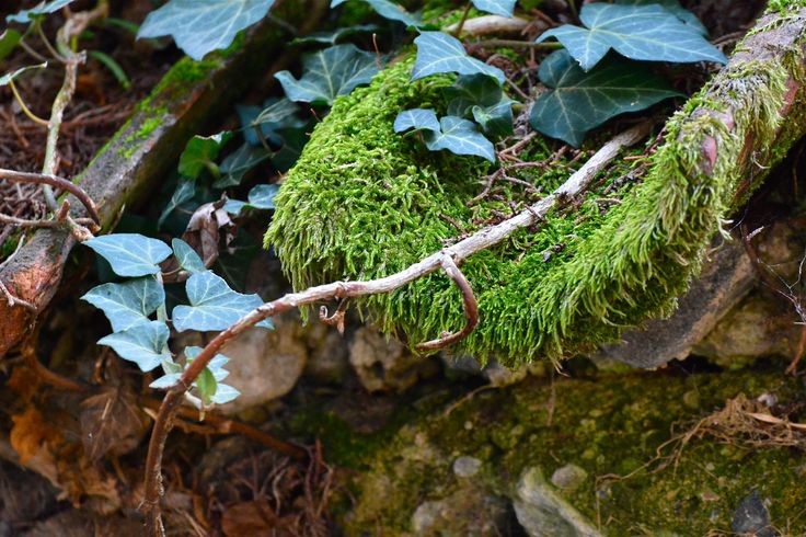 Nature beats Men - When Nature beats Men: old shingles covered with moss in Breganzona, Canton Ticino, Switzerland.