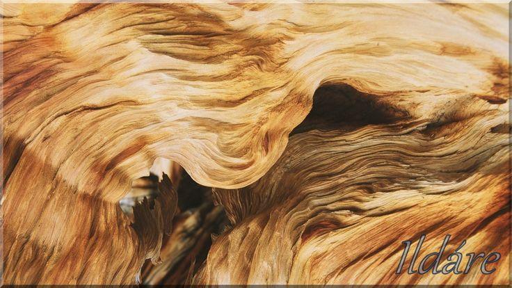 Gyökértörzs uszadékfa