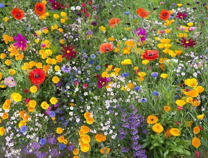 Vous voulez faire plaisir aux abeilles ? Plantez ces 22 fleurs mellifères dans votre jardin.