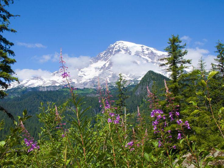 flores imágenes, Parque Nacional Monte Rainier del parque nacional de fondos de pantalla, montañas, bosques vector fondos