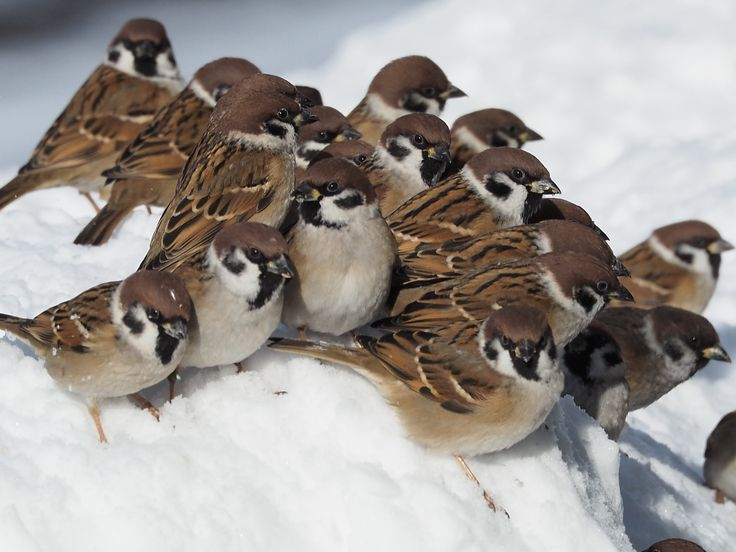 Oh how I love sparrows