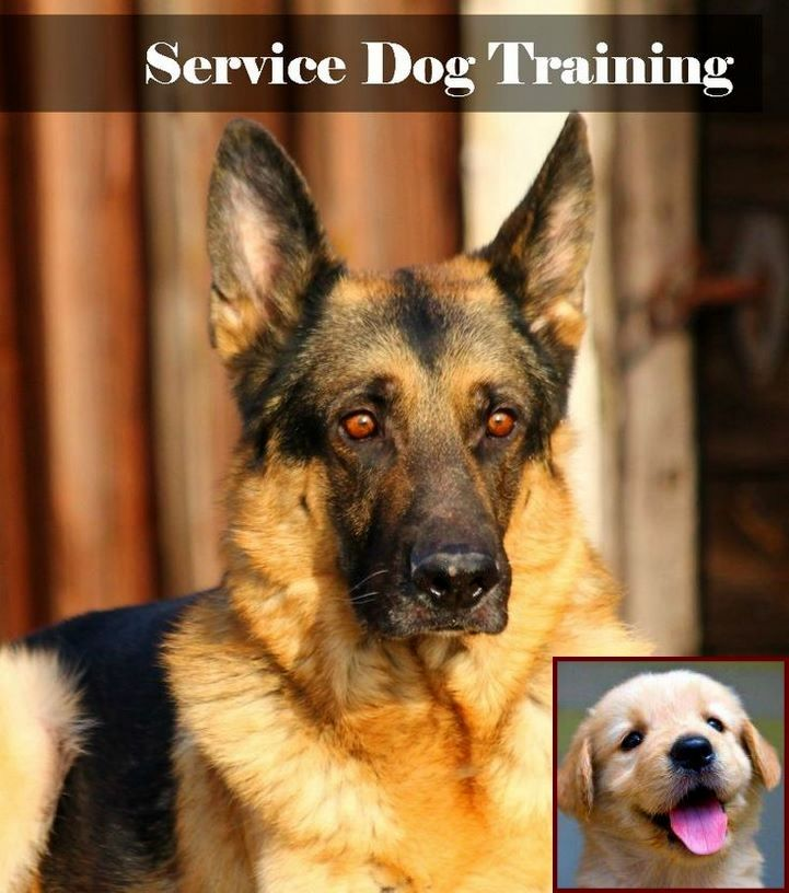 Dog Behavior Vs Wolf Behavior And Dog Training Courses In Sri