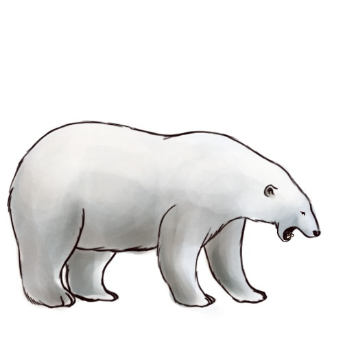 Cute polar bear drawing