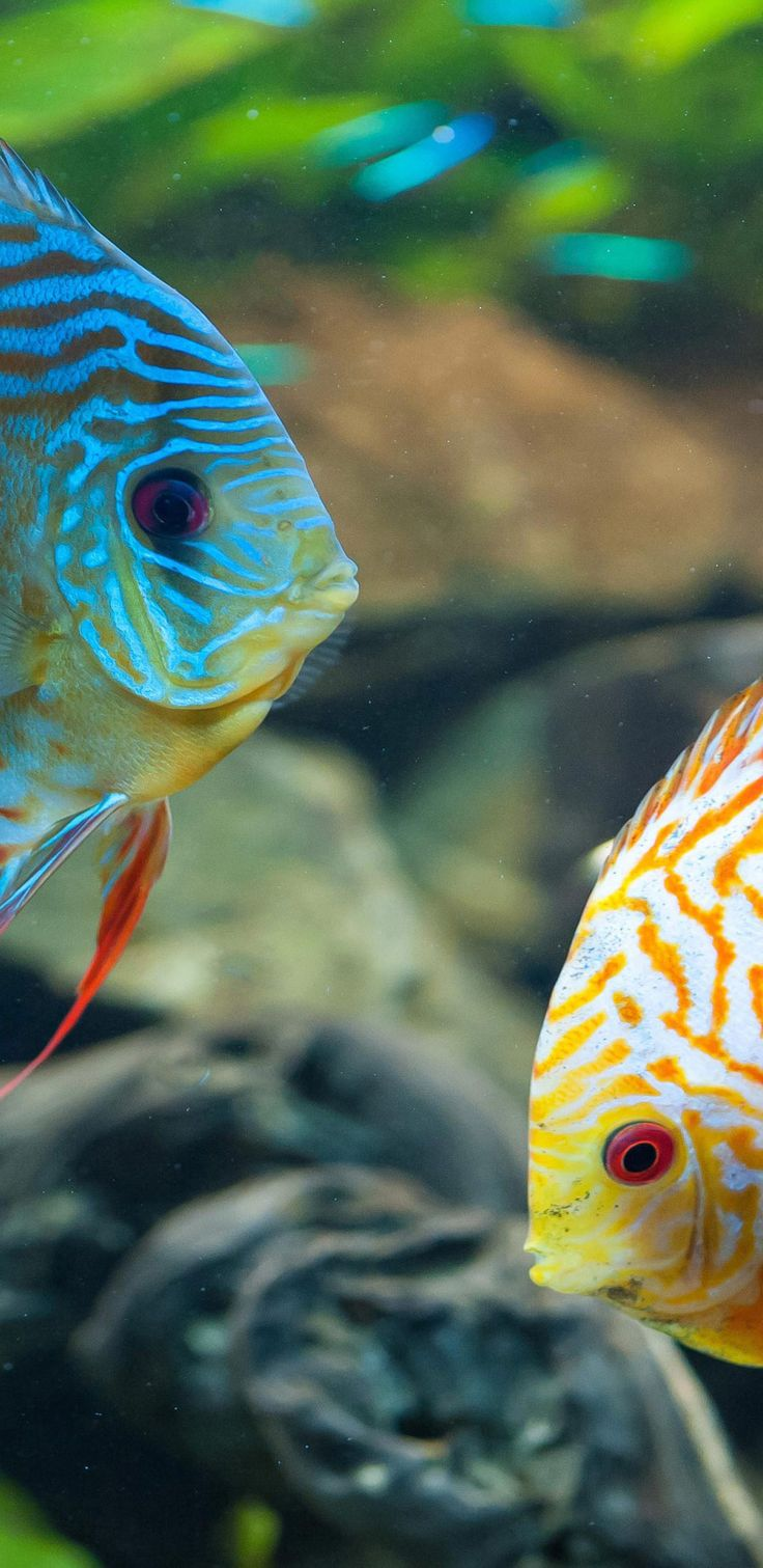 Pc nature wallpaper - Nature Wallpapers Hd And Widescreen Tropical Fish Nature 4k Wallpaper Http Www