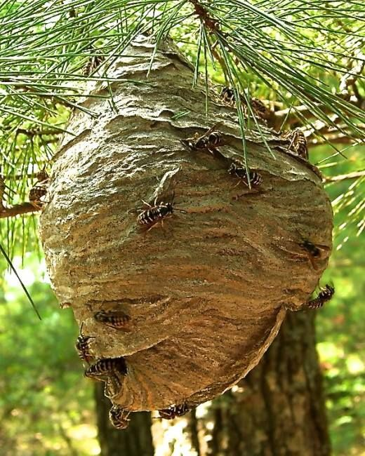 how to get rid of bees around your house