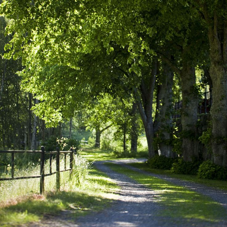 """View from the cycle path """"the Glassworks Tour"""". The paths starts from Målerås."""