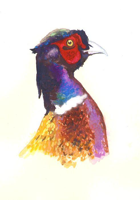 Cheeky pheasant with a beady eye! #pheasant #watercolour #painting #watercolour…