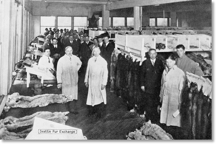 SEATTLE FUR EXCHANGE GRADERS, 1929 1929 - A look into the Seattle Fur Exchange grading area filled with fur buyers and smocked graders evaluating and sorting fur for its color variations, quality, length of hairs, sheen, thickness.